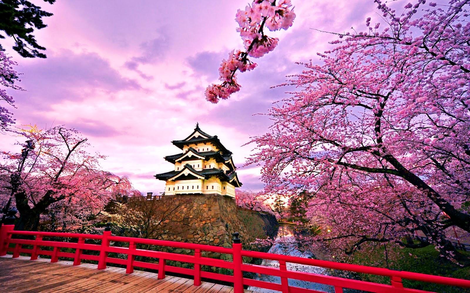 Alasan Memilih Berlibur Di Negeri Sakura