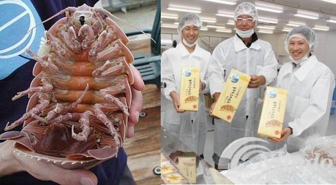 kerupuk isopoda raksasa kuliner khas nelayan Jepang