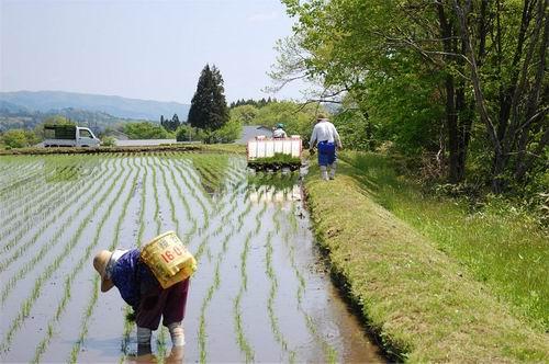 Ujian sertifikasi padi