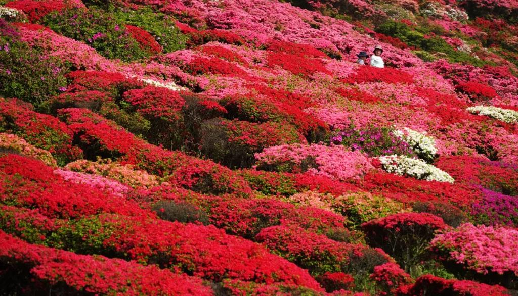 taman bunga nagushiyama3